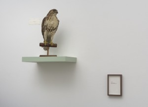 "Figure 6. Left: Clare Graham (Mor'York), Stuffed Hawk (n.d.). Right: Vivian Sming, ABSENCE (2011). Installation proposal. 10 5/8x7"" framed. Photo: Robert Weydemeyer."