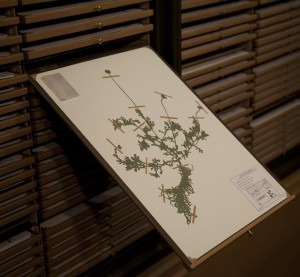Figure 10. Jenny Yurshansky, Blacklisted: A Planted Allegory (Herbarium), detail of hand-cut silhouette. Photo: Jenny Yurshansky.